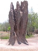 GoSee meets  Termite Towers, Mary River area, NT
