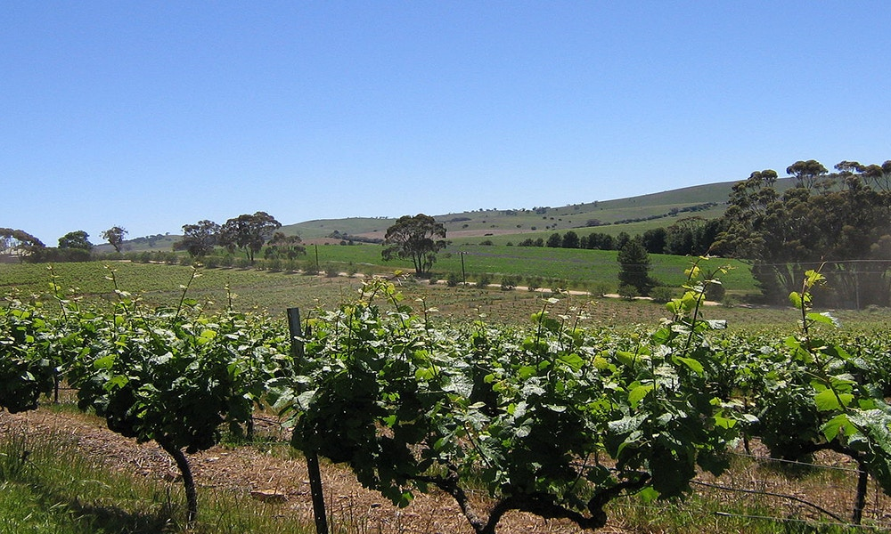 A Guide to the Clare Valley