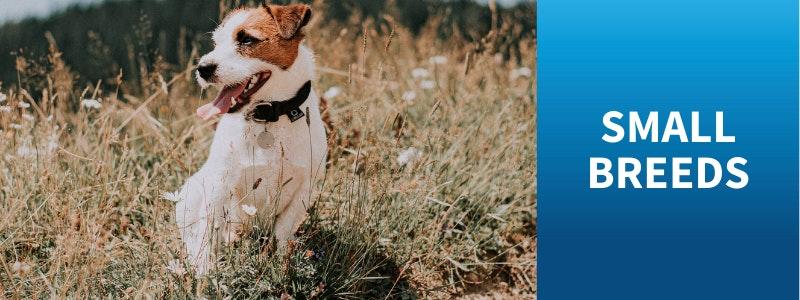 Watch Bondi Vet Videos Small Dogs