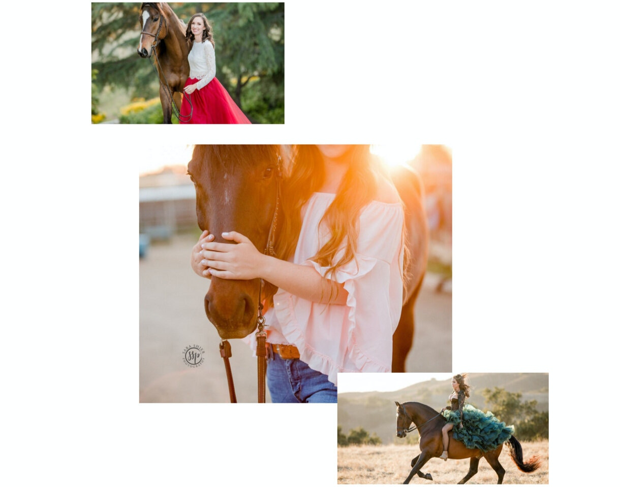 Sara Shier Photography: Have a bay horse? Here's what to wear to your Horse and Rider Session