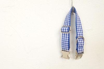Barker & Bone Dog Collar | Blue Plaid