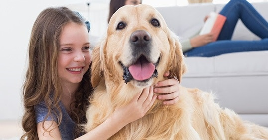 The invaluable gifts from a dog to a child