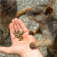 For a natural experience feed a wallaby