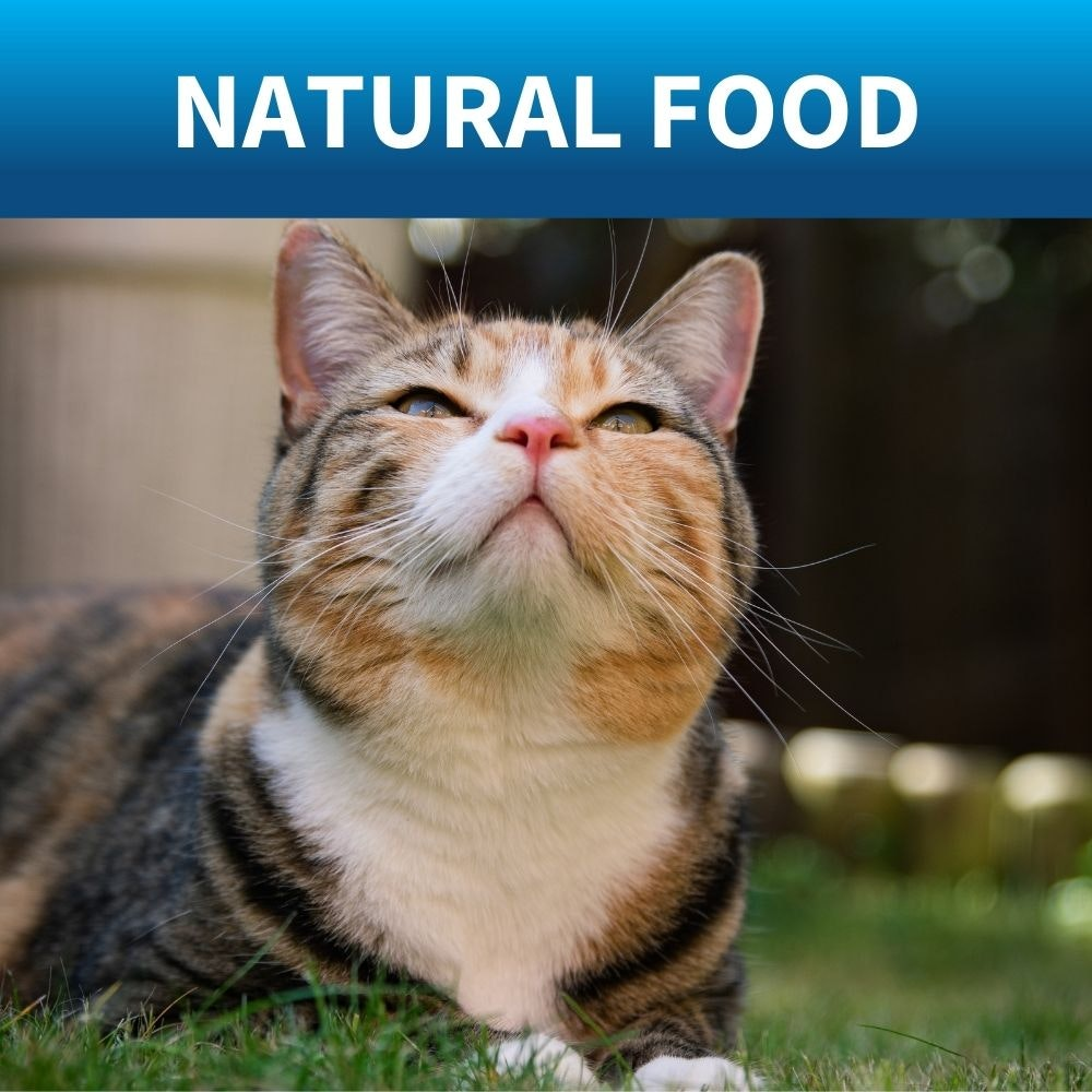natural food for cats
