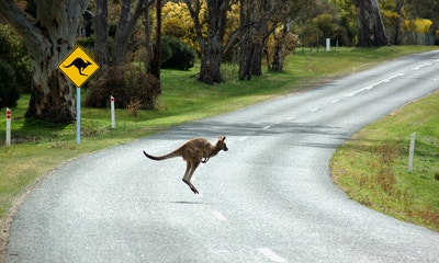 What to Do if You Hit a Roo