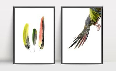 Print Set - Princess Parrot Flight and Feathers