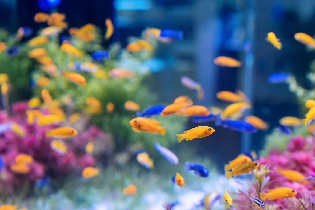 10 Popular Pet Fish Breeds
