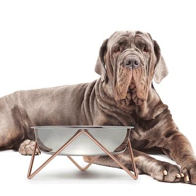 'WOOF XL' Dog Bowl NEW!