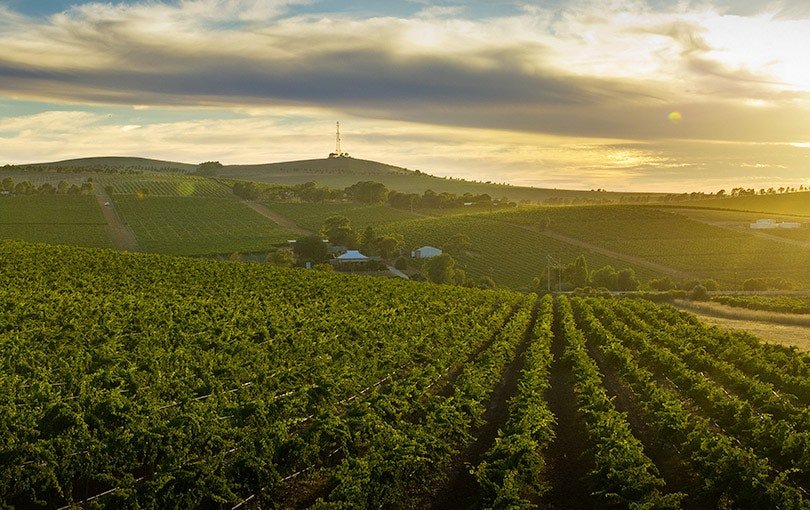 Clare Valley wine region