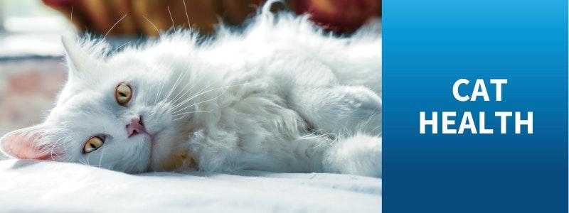 Watch Bondi Vet Cat Health Stories