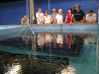 Prawn Farm Tour Team learn about breeding tanks
