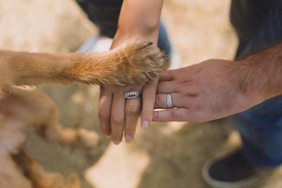 Tiere auf der Hochzeit