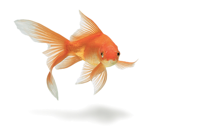 fish-forward-transp-png