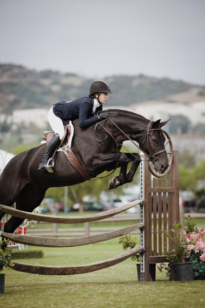 Equestrian Market Research Report 2018: THE STATS