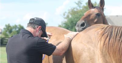 dr-steve-allday-exam-horse-png