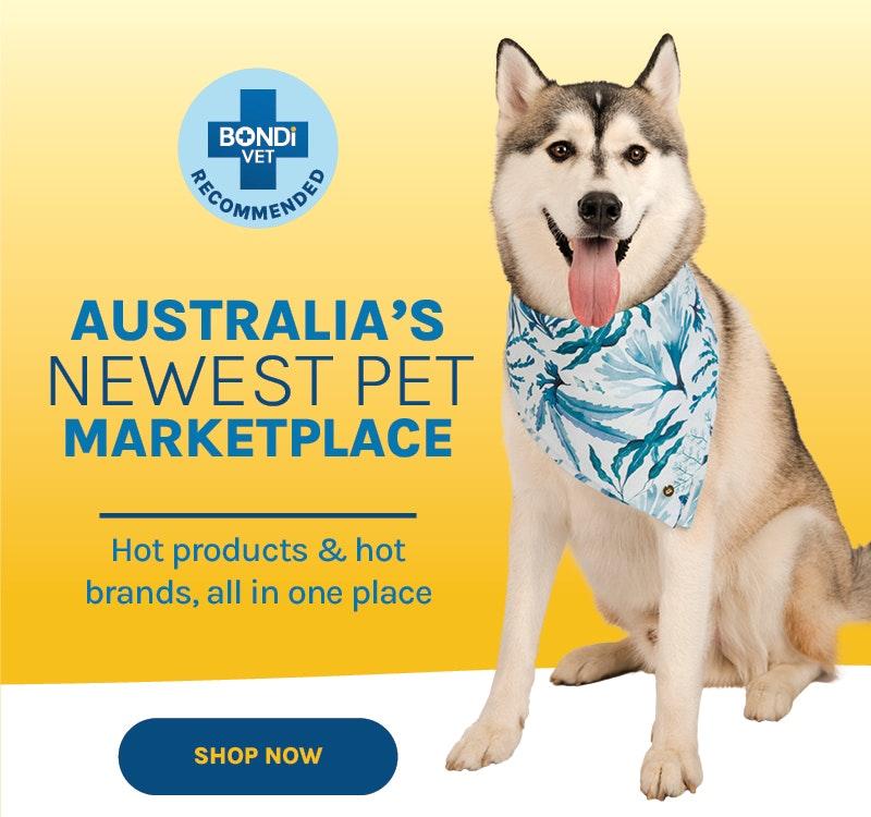 shop new arrivals on bondi pet