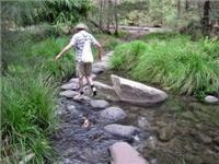One of  too many creek crossings on Carnarvon Gorge walking tracks