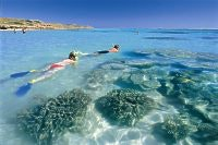 Snorkelling near Coral Bay, courtesy Tourism WA