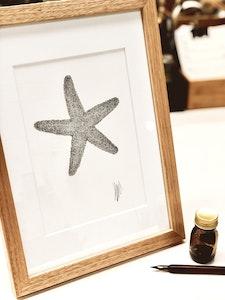 A4 Framed Original Botanical Ink Drawing 'You're a Star'