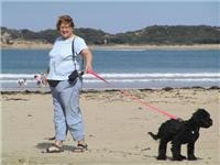 Pets play too off peak at Anglesea beach