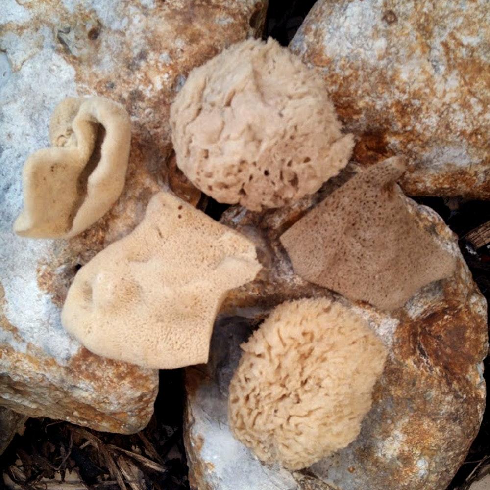 Natural Spa Supplies Baby Natural Sea Sponges