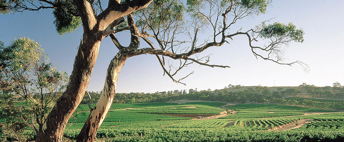 cellarspace-clare-valley-blog-img2-png