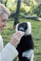 Orana Wildlife Park  encounter with the endangered Lemur.
