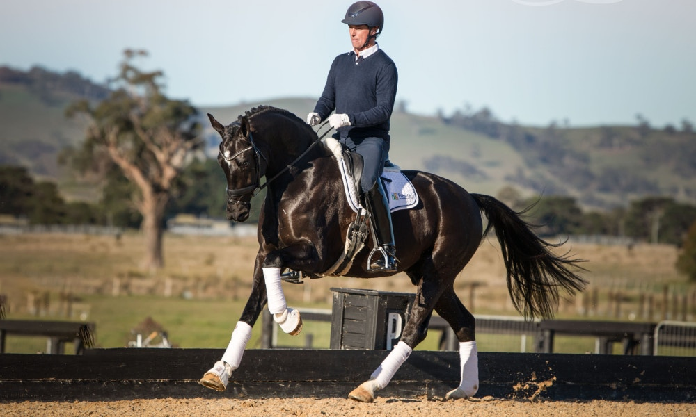 David Shoobridge Joins The Equestrian