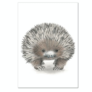 Echidna Australian Animal Print - A3