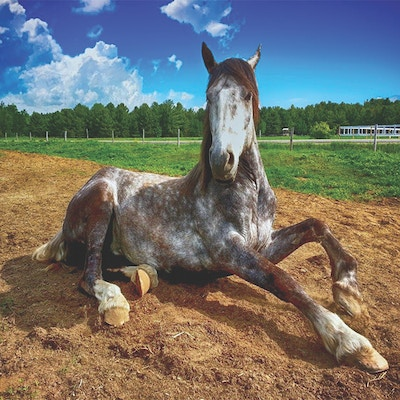What is a Cast Horse?