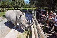 Rhino at short range Orana Wildlife Park Christchurch