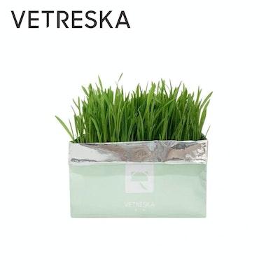 VETRESKA Soilless Cat Grass - Setaria