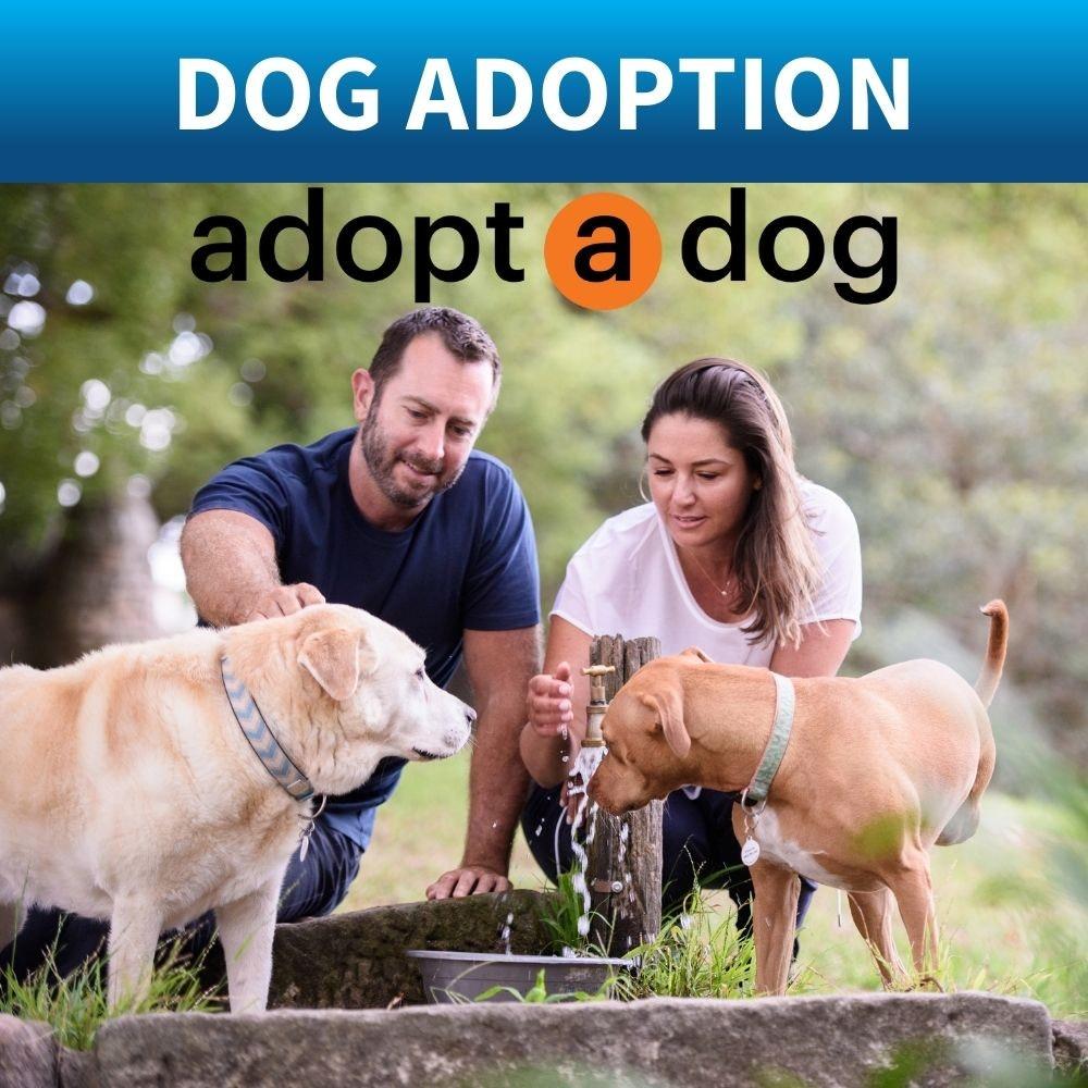 how to adopt a dog Australia