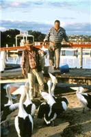 Feeding the pelicans Lakes Entrance courtesy imagesofgippsland