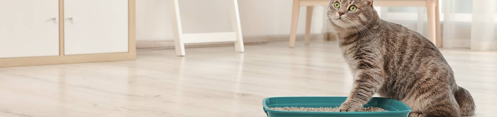 Choosing the Right Cat Litter