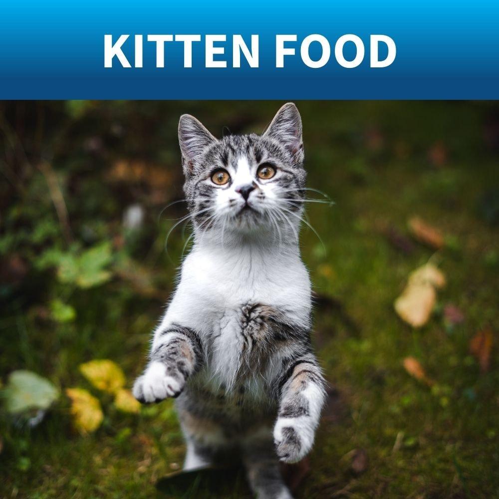 shop best for for kitten