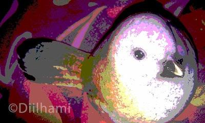 Diilhami Art Precious Birdie Art Print 410 x 260mm