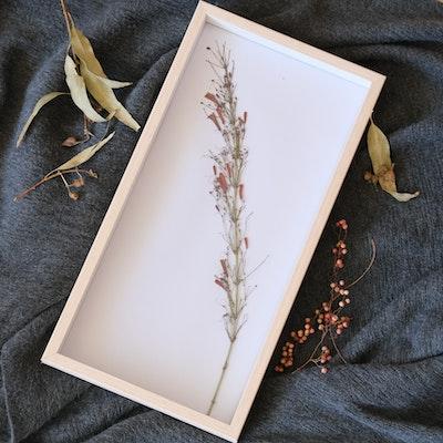 Florapeutic Firecracker - Pressed Floral Art