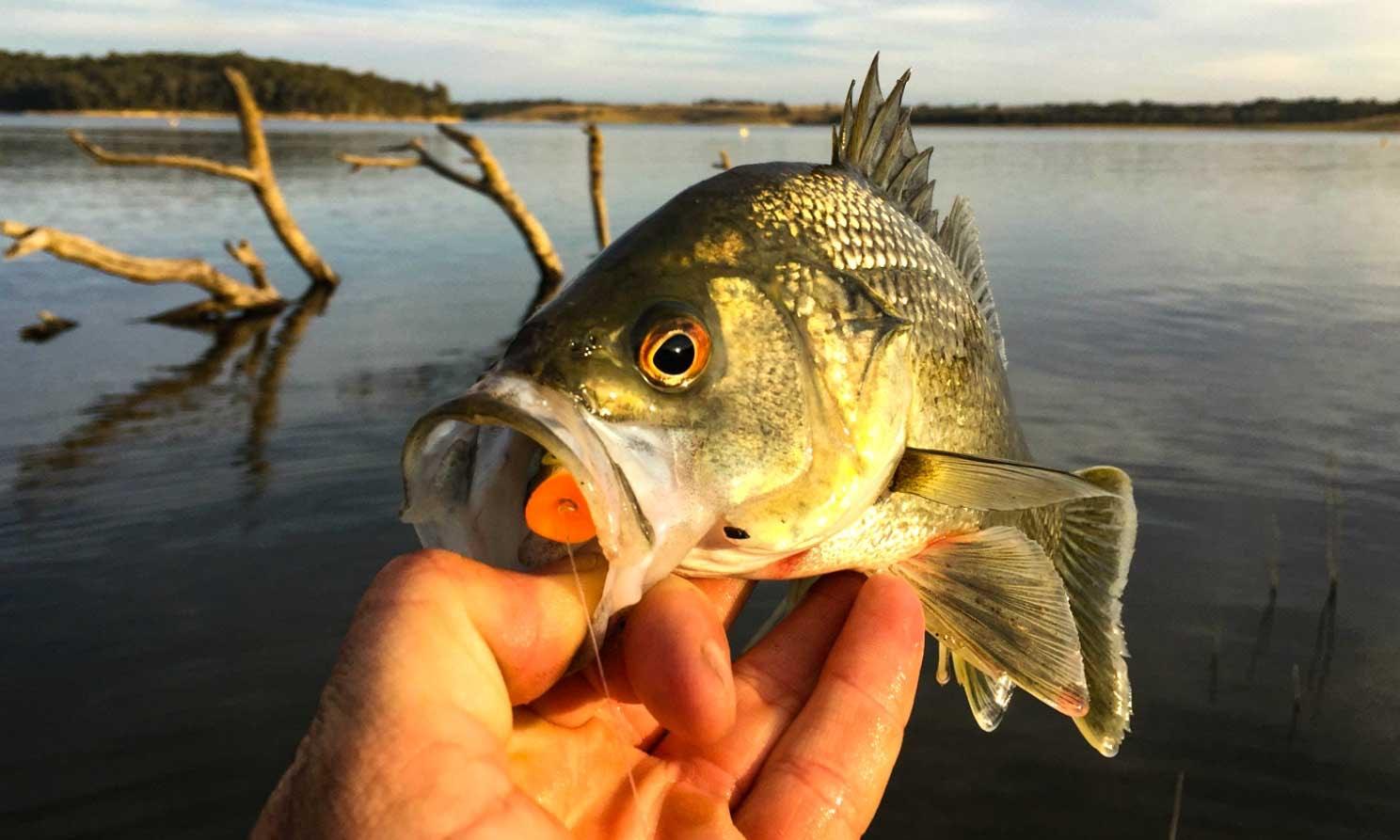 Blue Rock Lake Fishing – Local Advice