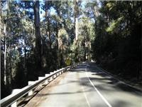 Sunlight dabbles the Black Spur road