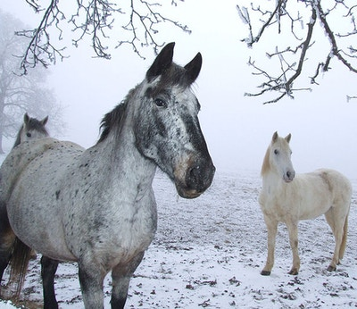 Winter Horse Riding Tips