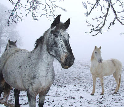 winter_horse_riding_tips_2_480x480-png