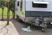 Chloe guards pet friendly campsite at  Levi Park, Adelaide.