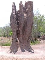 Towering termites, Mary River area, NT