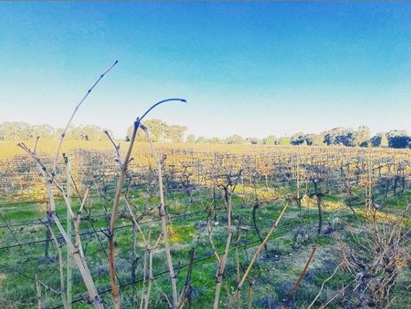 Find out more about Horvat Estate Vineyard