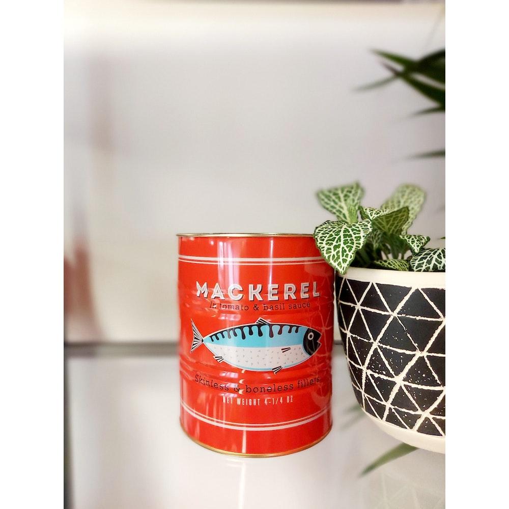 Pretty Cactus Plants  Red Mackerel Tin Planter - 11 X 13cm