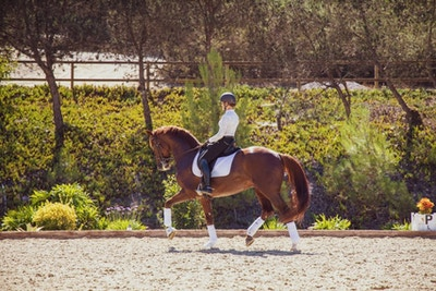 Sarah Lockman and First Apple: The Road To USEF International Horse of the Year Nominee