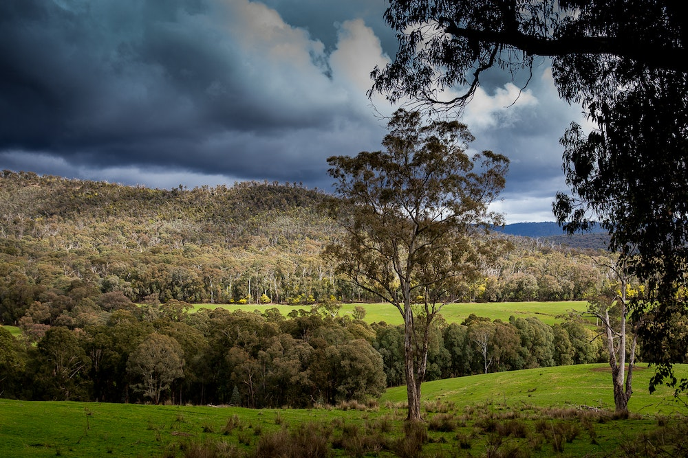 landscape in the king valley