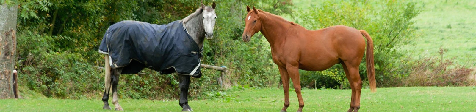 Choosing The Right Horse Rug