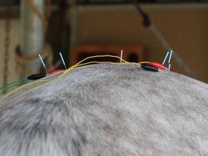 electroacupuncture-jpg